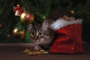 Tips on how to pet proof your Christmas tree from the International Elf Service